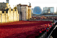 The Poppies of the Tower of London